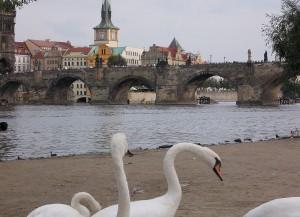 Прага. Карлов мост